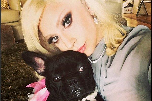 Леди Гага будет выпускать наряды для животных