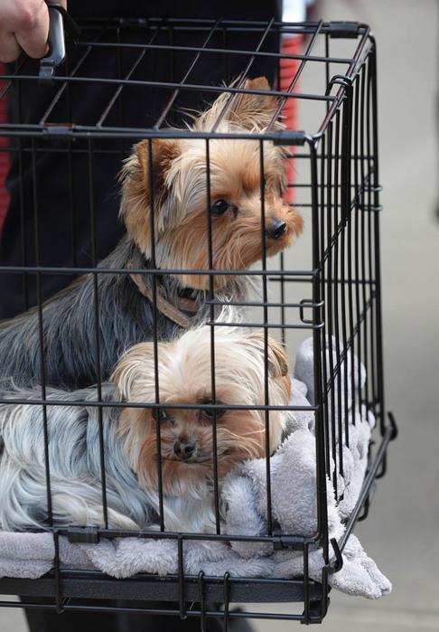 Собаки Эмбер Херд и Джонни Деппа. Фото: liveinternet.ru