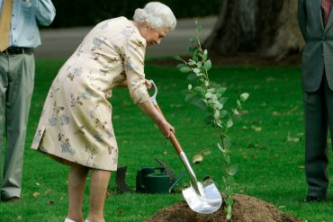 Садовник для королевы
