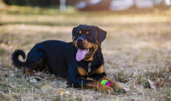Правила выбора низкокалорийного корма для собак различных пород при избыточном весе