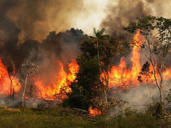 Удивительный поворот: Ди Каприо обвиняют в поджоге лесов Амазонии ради наживы