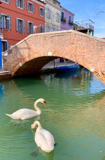 Коронавирус на благо - Вода в венецианских каналах стала кристально чистой