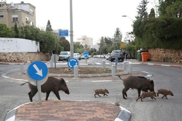 Израиль - если подловят на 101 метре от дома, срочно начинайте делать гимнастику! (маразм крепчал не только в России:))