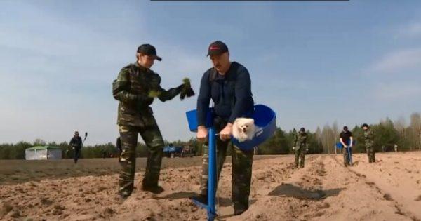 Вот он Антивирус - Лукашенко высаживает сосны в Чернобыльской зоне