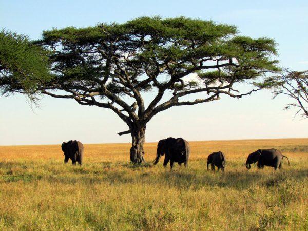 Фальшивые тесты - В Танзании папайя и коза показали положительный результат на коронавирус