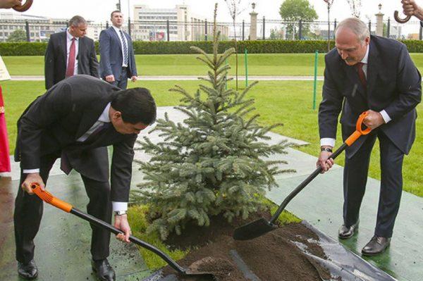 Лукашенко сажает дерево в дождь, фото: udf.by