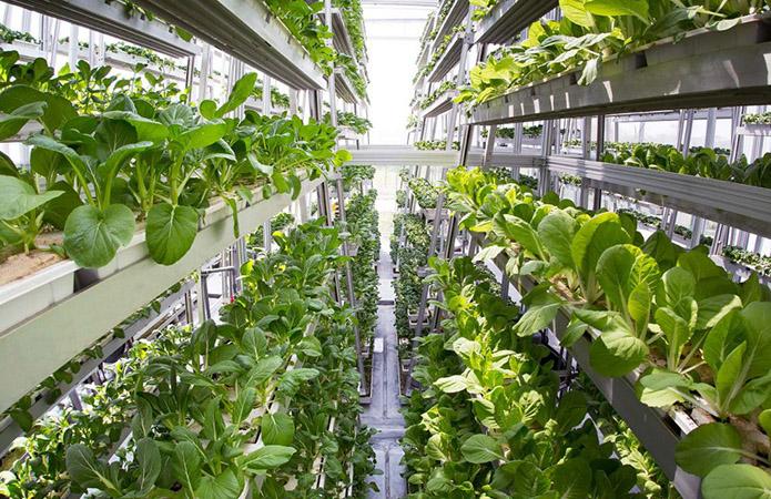 Выращивание зелени вертикальным способом
