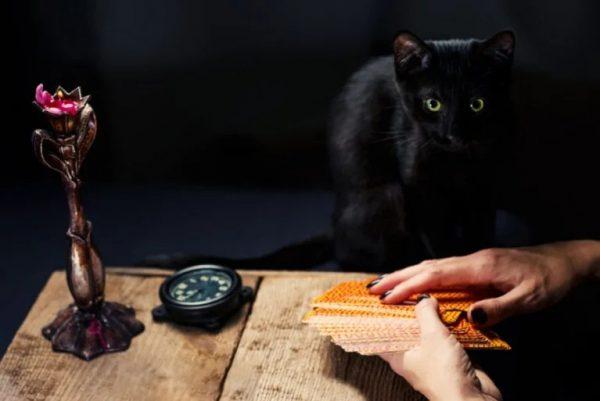 Кошка и ведьма