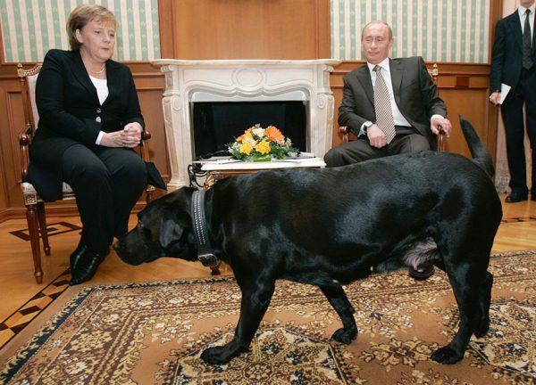 Ангела Меркель и Владимир Путин смотрят на собаку