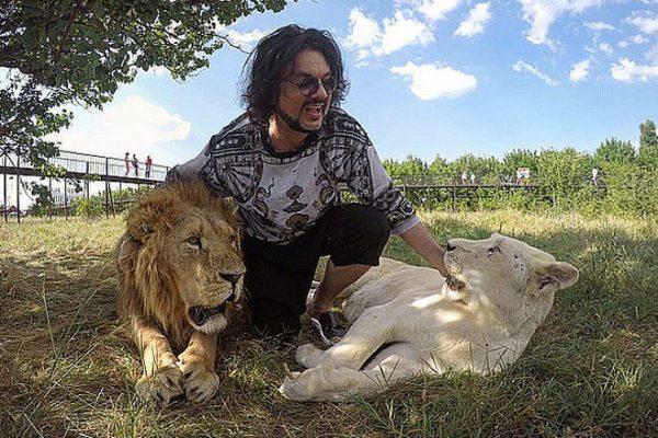 Киркоров гладит львов
