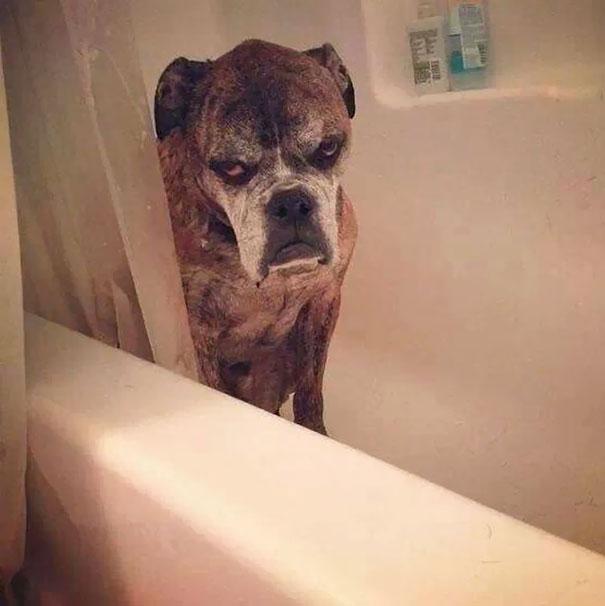Сердитый пес