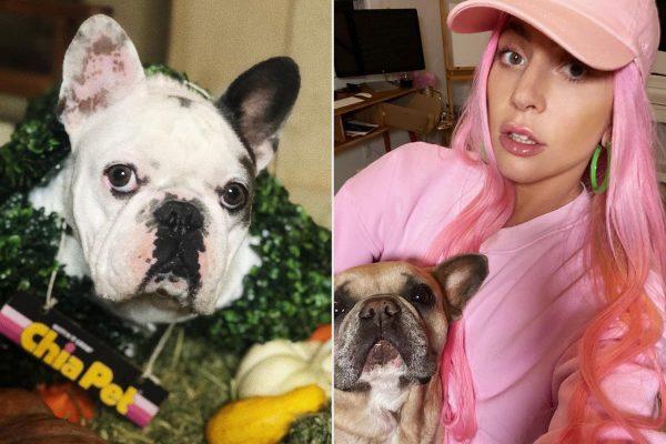 Украденные собаки Леди Гаги