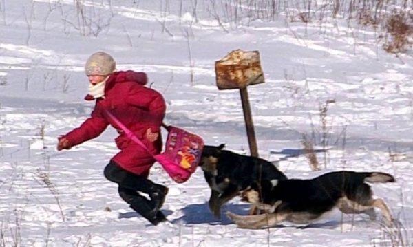 Нельзя убегать от бродячих собак. Фото newslab.ru