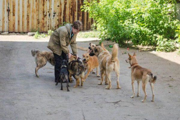 Люди подкармливают псов и учат их базовым командам. Фото ural.aif.ru
