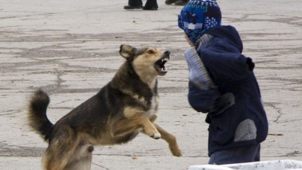 Нападение на ребёнка. Фото change.org
