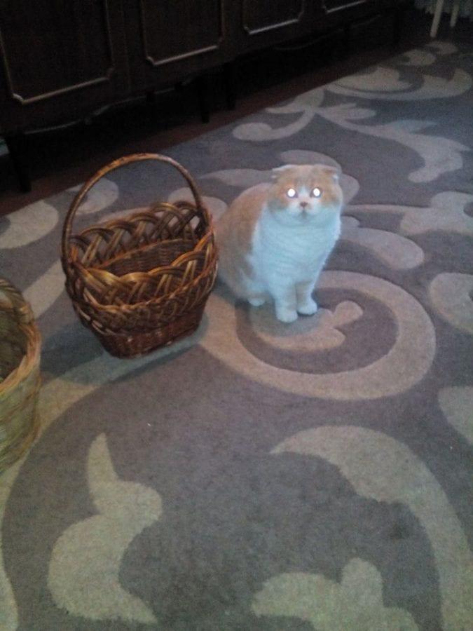 22 фото милых пасхальных котиков, которые у вас вызовут смех и слезы умиления
