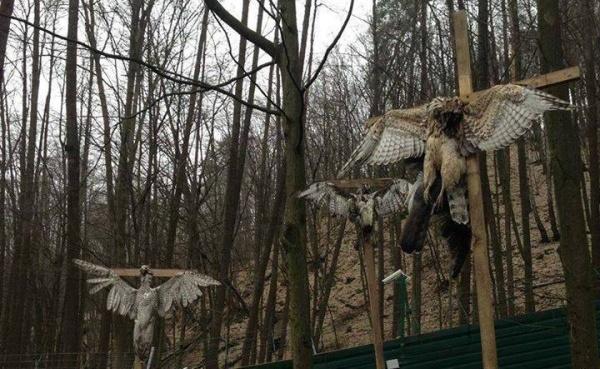 После Януковича в Межигорье нашли распятых ястребов. Фото livejournal