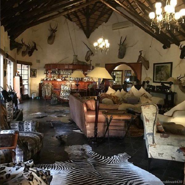 Это гостиная с многочисленными чучелами и шкурами редких животных. Фото kp.ua