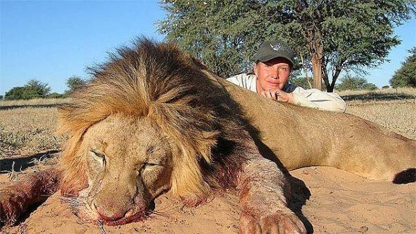 Тот самый лев, с которого сделали чучело для дома. Фото livejournal
