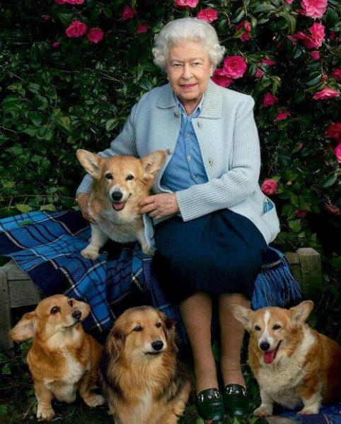 Елизавета II и её питомцы