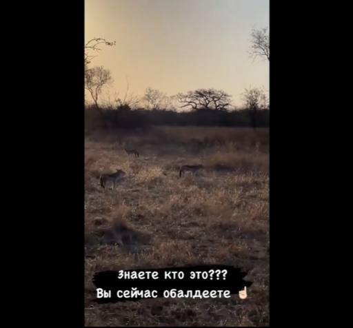 Ольга Бузова и шакалы. Фото Инстаграм
