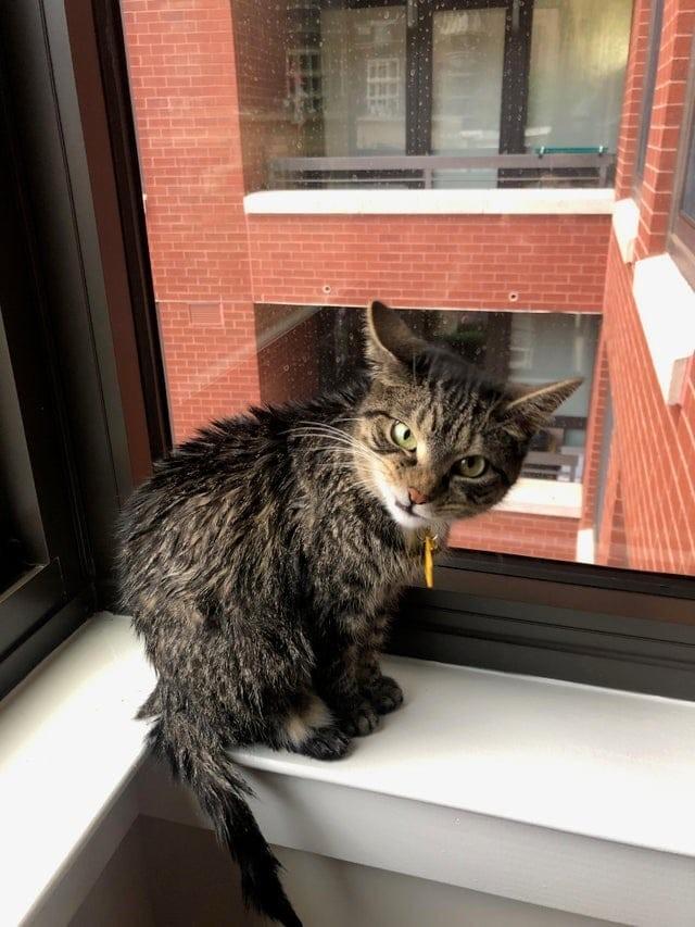 23 фото эмоциональных котиков с весёлыми комментариями для хорошего настроения