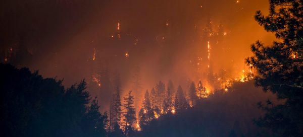 Лесные пожары. Фото news.un.org