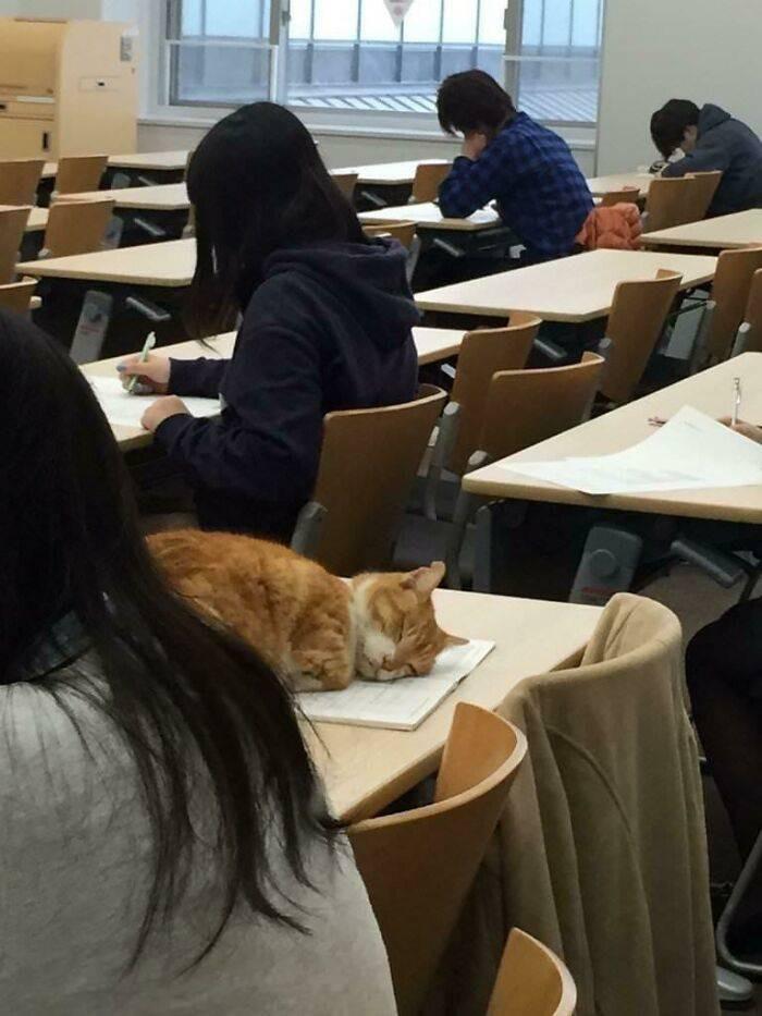 Вы будете очень долго смеяться от этих фото с котиками, а ещё больше - от комментариев хозяев к ним
