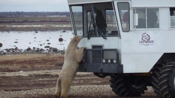 """""""Здравствуйте, можно познакомиться?"""": 20 невероятных фото встречи людей и диких животных"""