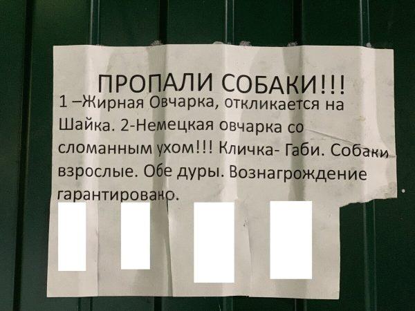 """""""Отдам в женские руки своего 50-летнего сына"""", - самые уморительные объявления, которые могли написать только в России"""
