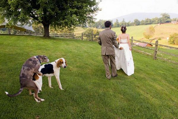 Зато мне хорошо! Самые смешные свадебные фото с участием собак