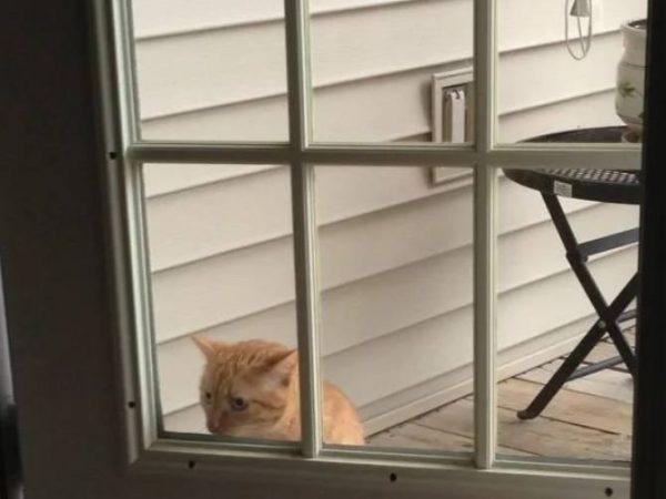 """25 трагикомических фото из цикла """"когда твой кот - идиот"""". Бывает и такое"""